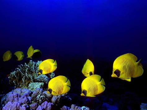 fond d ecran poisson qui bouge fond d ecran poisson qui bouge 28 images fond d 233 cran poisson anim 233 fonds d 233 cran