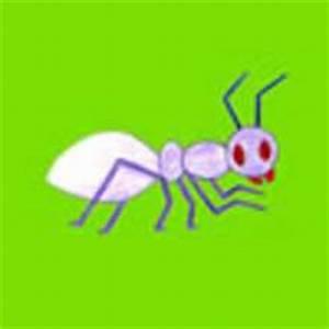 Wie Fängt Man Eine Maus : wie man tiere malt wie man eine kleine maus malt ~ Markanthonyermac.com Haus und Dekorationen