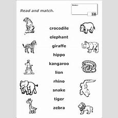 Wild Animals Vocabulary For Kids Learning English  Matching Game