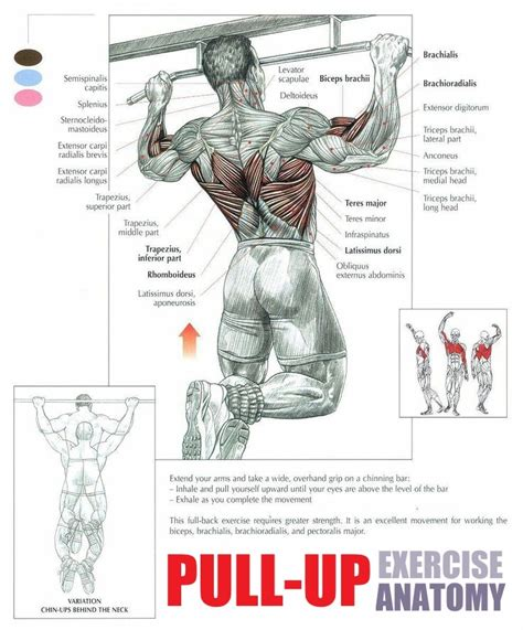 pull up range of motion this pull up workout guide will help you rise above all