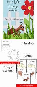 Ant Life Cycle  Mini Unit