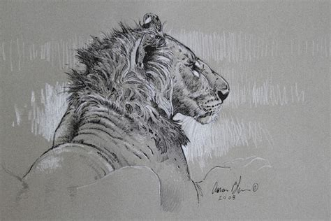 ink drawings     years   art