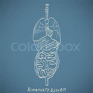 Chalk Painted Alimentary System
