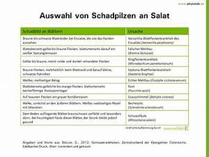Gemüse Pflanzen Was Passt Zusammen : phytotab tabellen der kategorie 39 pilze 39 ~ Lizthompson.info Haus und Dekorationen