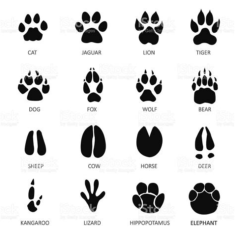 animals footprints white background