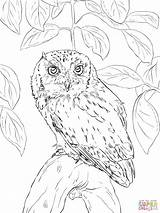 Owl Coloring Barn Screech Realistic Eastern Detailed Drawing Horned Printable Flying Owls Sheets Adults Drawings Getcolorings Patterns Embroidery Bird sketch template