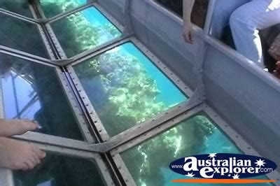 Glass Bottom Boat Victoria by Plant Life Through Glass Bottom Boat Photograph Plant