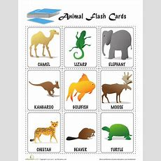 Animal Flashcards  Want To Try  Pinterest Preschool
