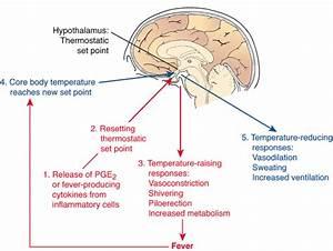 Pathophysiology 123  U0026gt  Dr Goss  U0026gt  Flashcards  U0026gt  Chapter 3  Inflammation  The Inflammatory Response