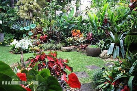 beragam jenis tanaman taman tropis diminimaliscom