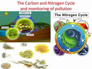 Gcse Biology  The Carbon And Nitrogen Cycle And Monitoring