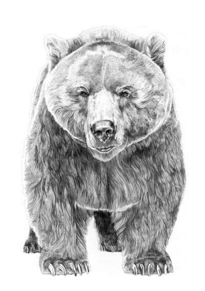 MELK: Cool Illustrations by Jamie Mitchell | Животные графика | Bear art, Bear pictures, Animal