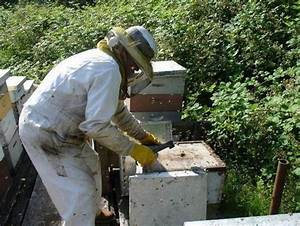 The Beekeepers Calendar Year And Guide To Bee Keeping