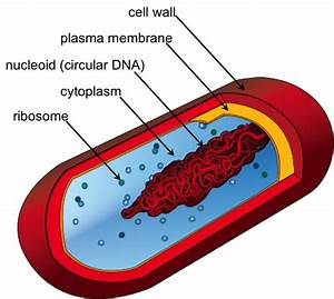 The Cell  U2014 The Biology Primer