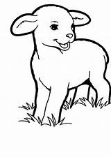 Lamb Coloring Baby Grass Sheep Pages Eating Drawing Colouring Sheet Printable Sheets Sky Print Getdrawings Getcolorings sketch template