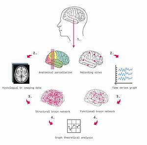 The Introductory Guide To Neuroscience
