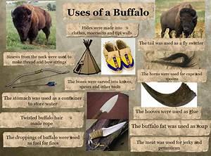 Buffalo Uses Diagram 5  Buffalo  Diagram  En  Jerky  Meat