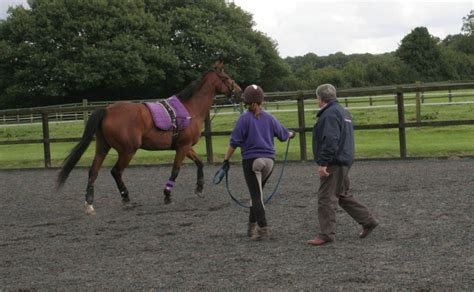 Problems When Single Line Lunging