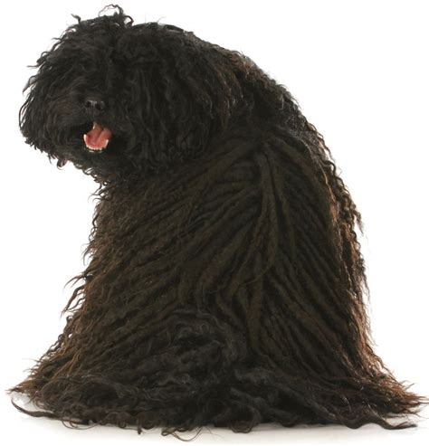 Low Shedding Dogs by Low No Shed Dogs To Ideas
