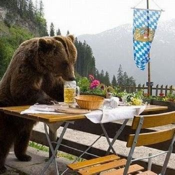 Family of bears drink 100 cans of beer