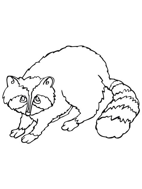 raccoon coloring pages    print