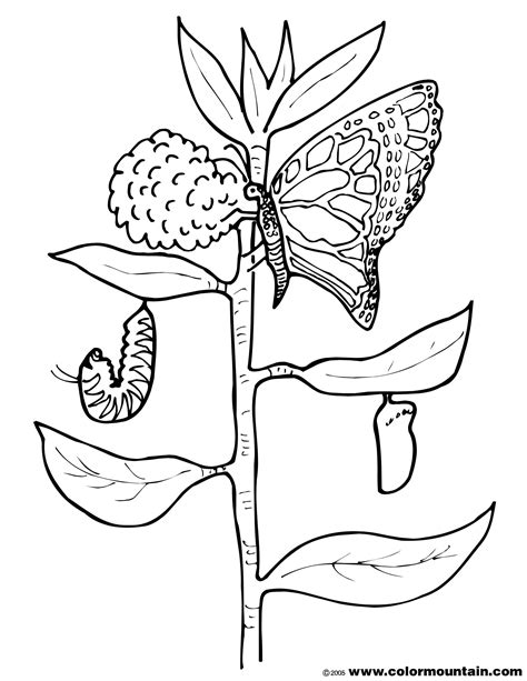 cocoon coloring page  getcoloringscom  printable colorings pages  print  color