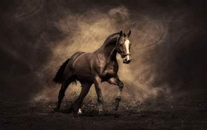 Horse Wallpapers Horses Equestrian Cave Pretty
