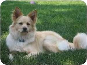 Louie | Adopted Dog | Sonal | Raritan, NJ | American ...