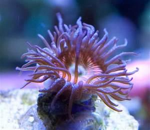 Darwin U2019s Reef Exploration Team  Licensed For Non