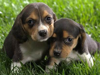 Puppy Puppies Very Wallpapers Dogs Dog Puppys