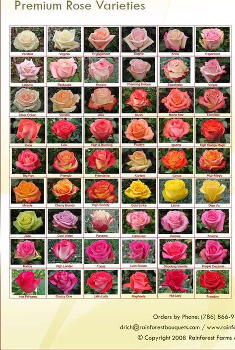 variety names rose varieties rainforest farms bouquets jardin pinterest farms bouquets and types of