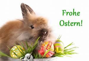 Schöne Ostertage Bilder : wir w nschen sch ne ostertage osterhase im nest md cheerdance ~ Orissabook.com Haus und Dekorationen