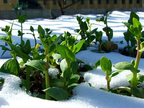Planting Vegetables In Early Winter For
