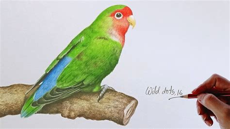 love bird drawing  love bird  colored pencils