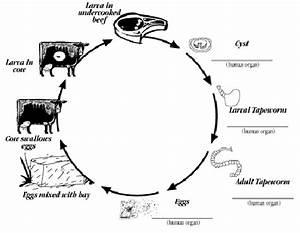 Parasite Activity Page