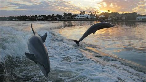 naples florida dolphins boating dolphin fl water boat