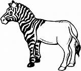 Zebra Coloring Clipart Drawing Pages Clip Stripes Line Animals Without Half Striped Its Wikiclipart Smiling Still Preschool Horse Resource Printable sketch template