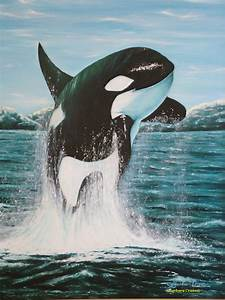 Killer Whales Interesting And Fun Facts Videos Photos