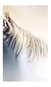 White Tiger HD Wallpaper | Background Image | 1920x1080