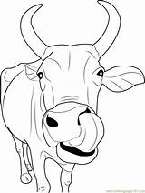 Cow Coloring Face Indian Coloringpages101 sketch template