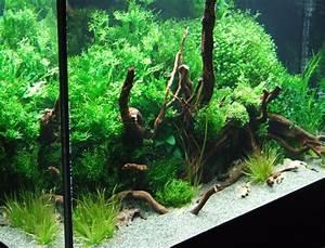 Pflanzen Für Aquarium : wasserpflanzen im aquarium aquarium knowhow ~ Buech-reservation.com Haus und Dekorationen