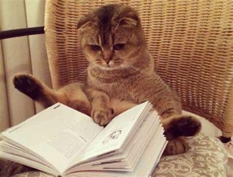 national cat day national awareness days calendar