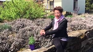 Plant De Lavande : plants de lavande printemps youtube ~ Nature-et-papiers.com Idées de Décoration