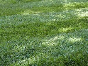 Gazon En Rouleaux : du gazon naturel en loire atlantique avec bogazon ~ Melissatoandfro.com Idées de Décoration