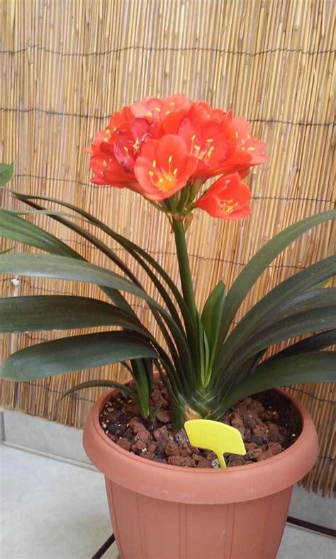 giftige zimmerpflanzen  giftpflanzen die sie kennen