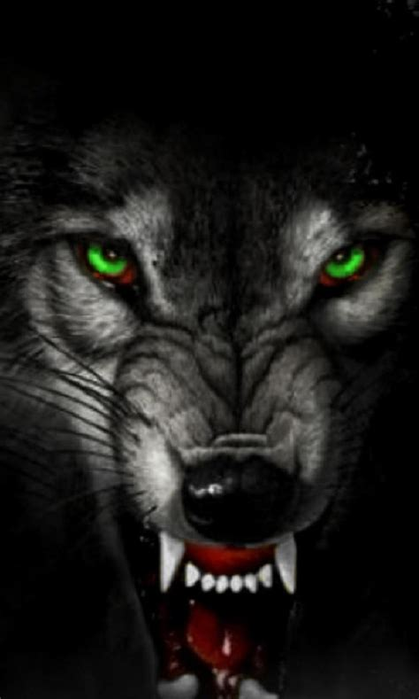 wolf wallpaper red eye  wallpaper