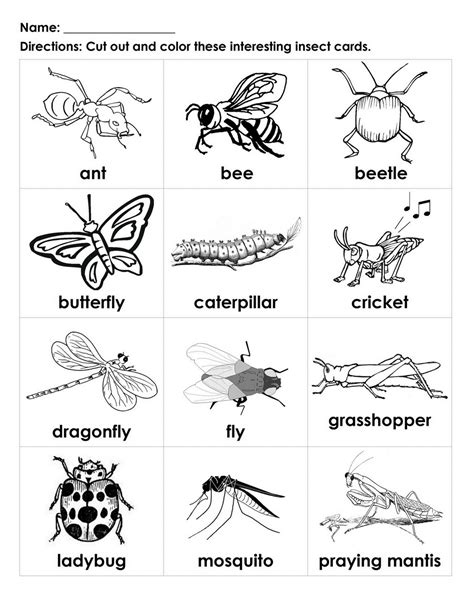 Insect Worksheet Preschool Worksheets For All  Download And Share Worksheets  Free On