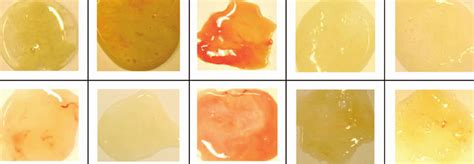 phlegm color chart phlegm or sputum color causes of cough with phlegm how