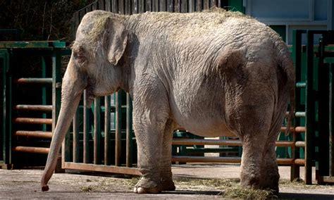 anne  circus elephant