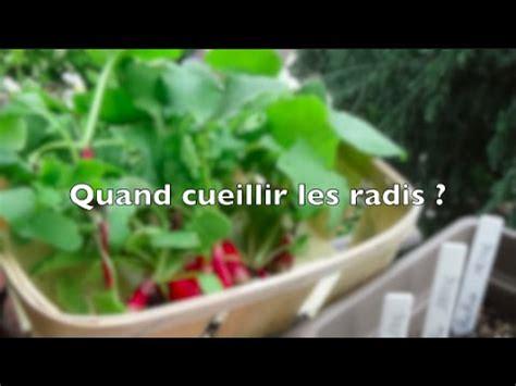 vote no on comment planter des radis en pots
